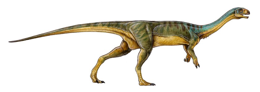 The newly described Chilesaurus has the body of a Tyrannosaurus Rex and the teeth of a gentle plant eater.