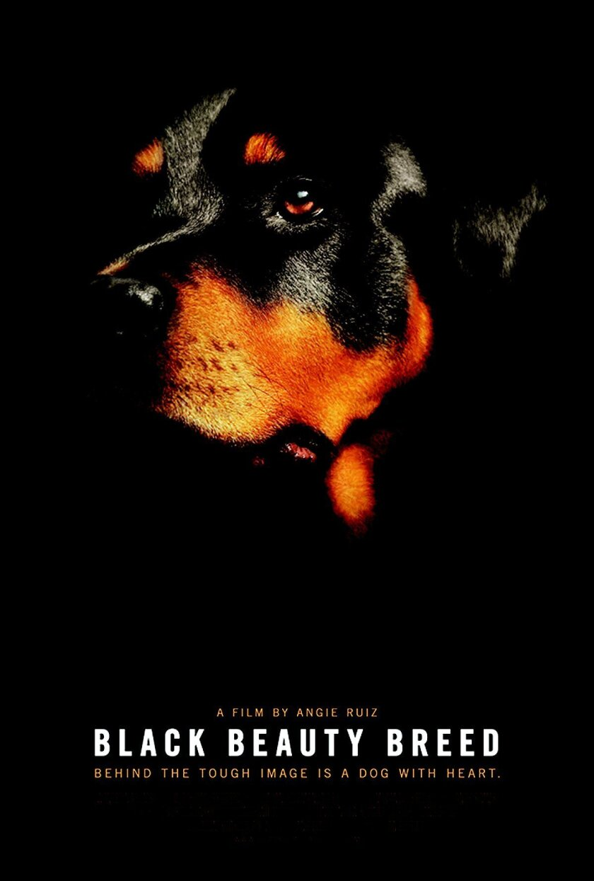 'Black Beauty Breed' plays for one night only, 8 p.m. sept. 25 at landmark la Jolla Village cinemas.