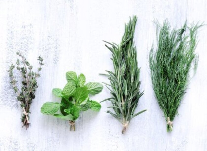 Four herb varieties, from left: thyme, mint, rosemary and dill.
