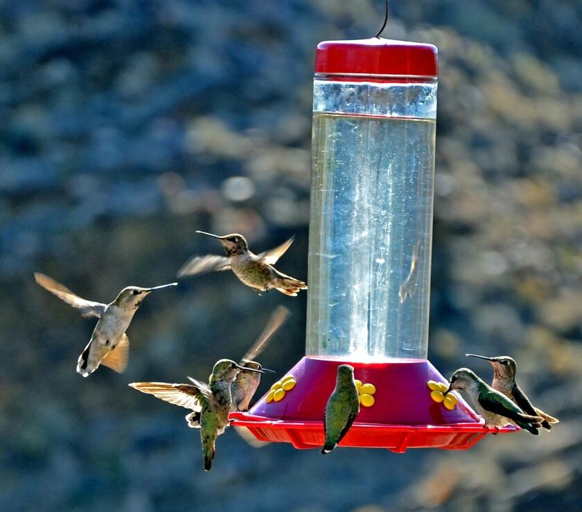 Hummingbirds congregate at a bird feeder.