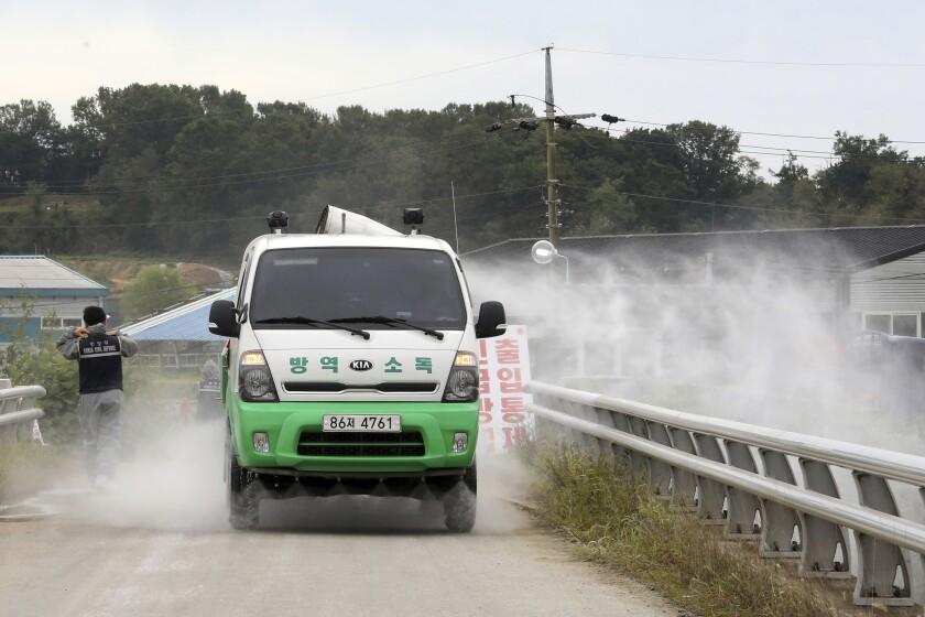 South Korea Swine Fever
