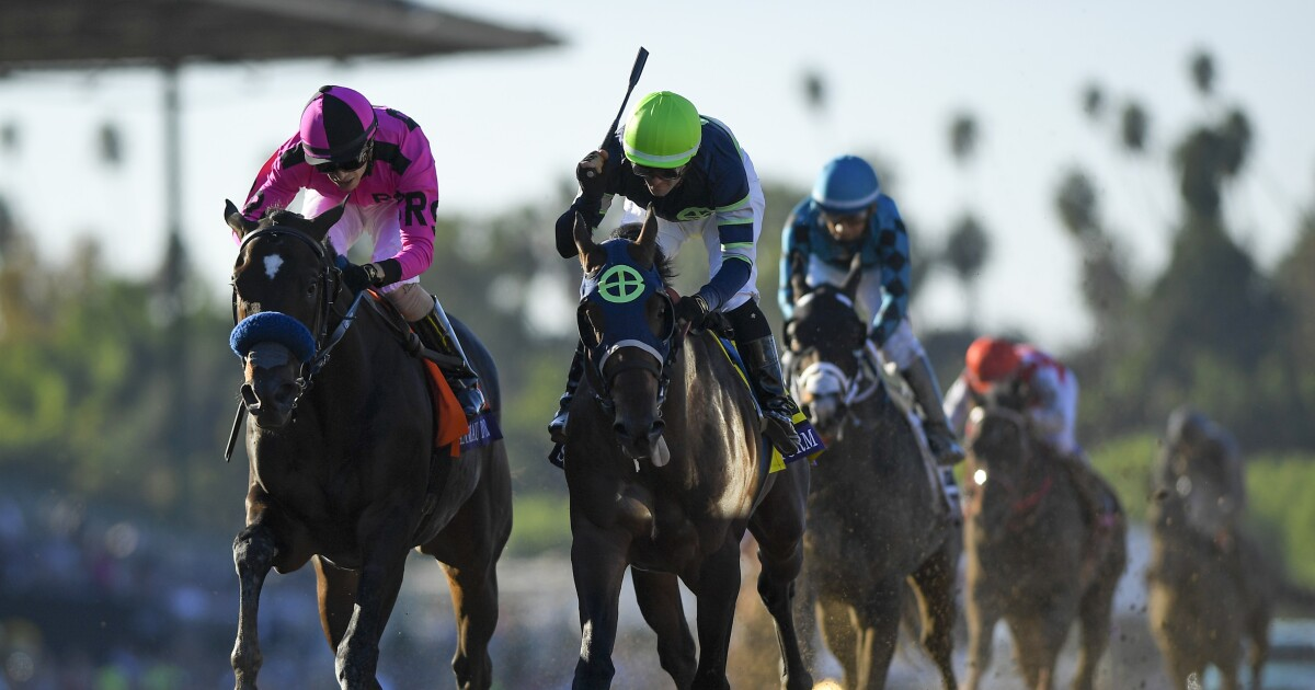 Storm The Court Is The Top Longshot In Breeders Cup