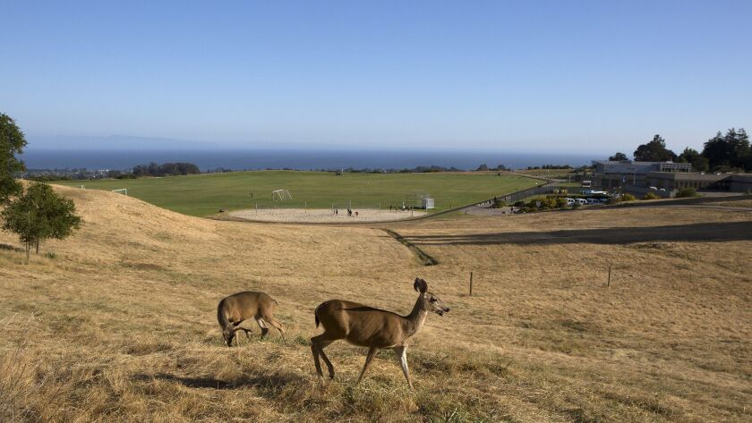 Deer graze above a beloved meadow targeted for UC Santa Cruz student housing in a controversial plan that UC regents discussed on Wednesday.