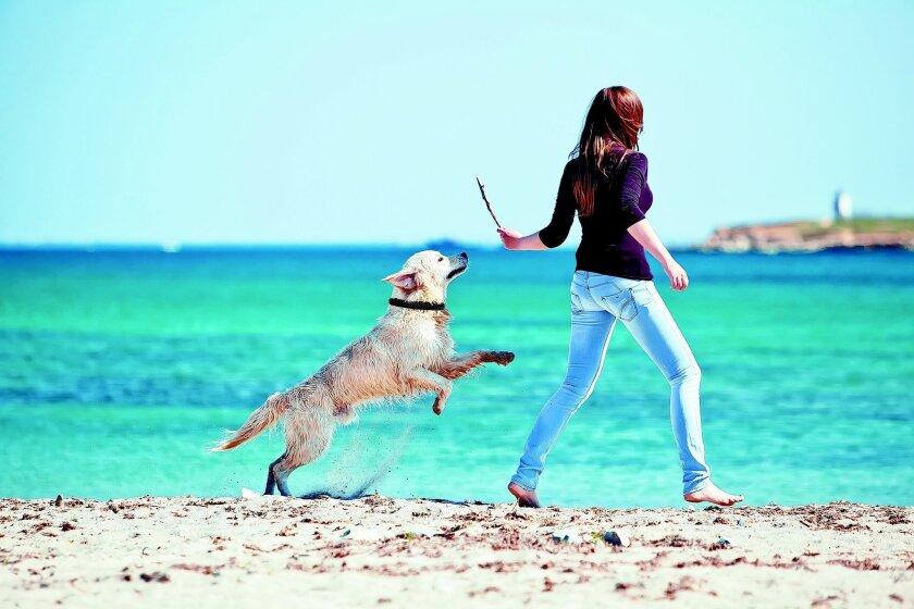 """Con este sistema también llamado """"correa virtual"""", una persona puede conocer la localización geográfica de su perro con una exactitud de tres metros, cuando no está con el animal, así como monitorizar su actividad.DogTelligent USA"""
