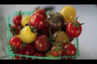 Market Fresh: Cherry and Grape Tomatoes