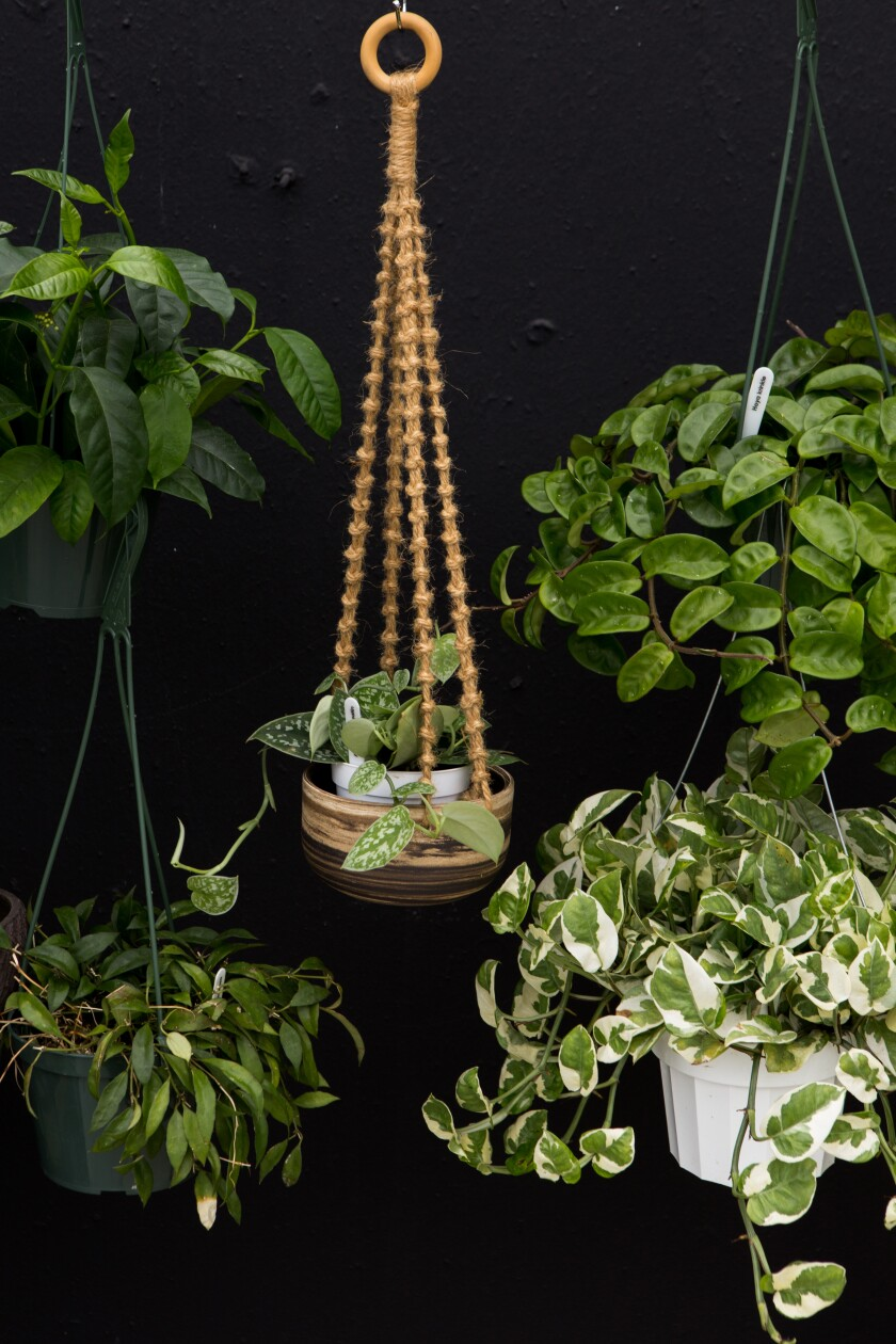 Plants hang on display outside of the Leaf and Spine store.
