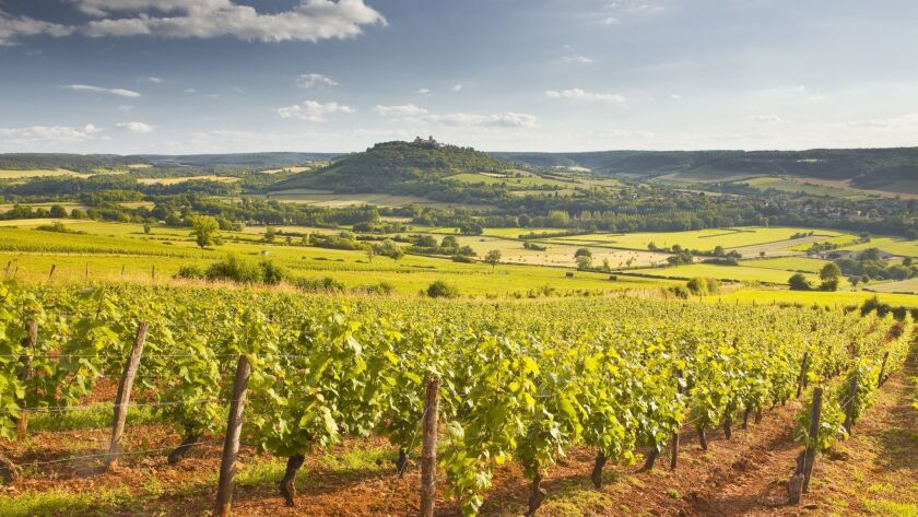 Vineyards near to the Beaux Village de France of Vezelay in the Yonne area, Burgundy, France..