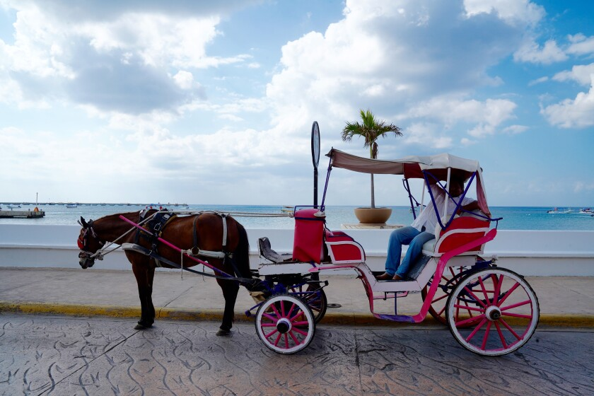 Horse-drawn carriage and driver in Cozumel