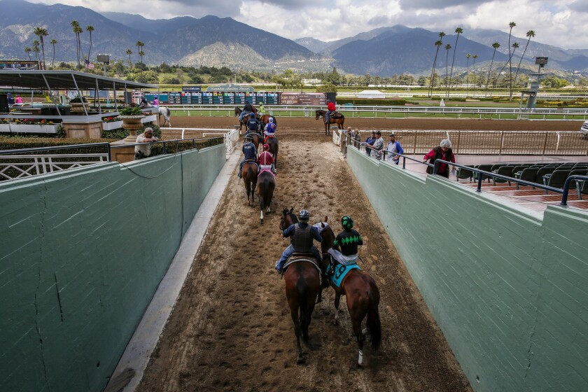 Jockeys lead their horses to the Santa Anita Park track for a race.