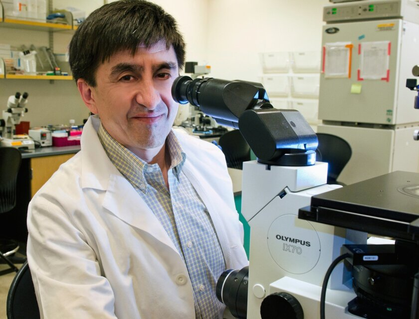 This photo provided by Oregon Health & Science University Photography shows Dr. Shoukhrat Mitalipov of the Oregon Health & Science University in Portland, Ore. Mitalipov hopes to test a technique that will use the DNA of three people, one man and two women, to create embryos, in the quest to prevent mothers from passing debilitating genetic diseases to their babies. (Oregon Health & Science University Photography via AP)