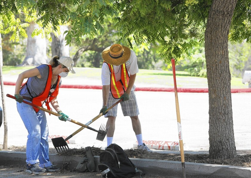 """Mimi Gazzale and Brandon Onstead help prepare the ground near Chinese pistache trees in Griffith Park for watering with """"irricades."""""""