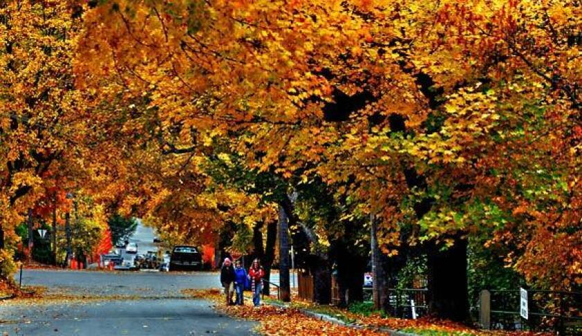 Nelson, Canada: Fall foliage in a laid-back atmosphere - Los