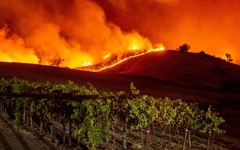 Flames approach rolling hills of grapevines during the Kincade fire near Geyserville, Calif., on Thursday.