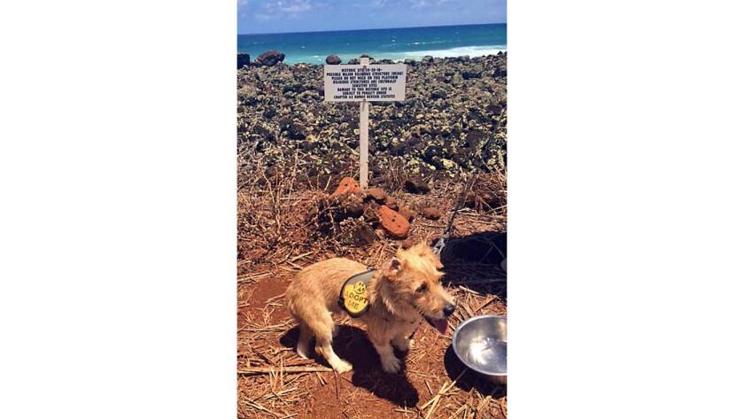 Hawaiian animal shelter on Kauai lets visitors take dogs on a daytime adventure