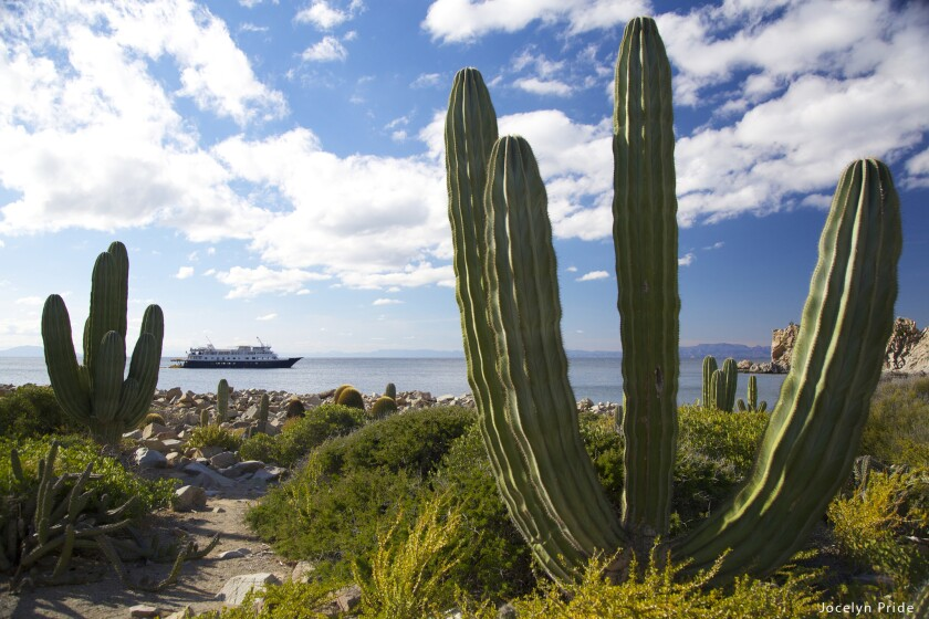 Un-Cruise Adventures offers adventurous excursions on cruises in Mexico's Sea of Cortez.