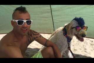 Surf City Surf Dog contest