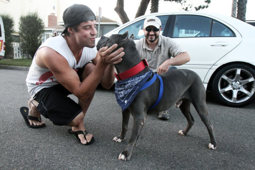 """Dog owner Eric Hough, left, reunites with his dog, Smoke, at his Huntington Beach home. """"I'm stoked that I'll be able to have him now in my life everyday,"""" Hough says. Hough plans to take him on daily walks at the beach, he adds."""