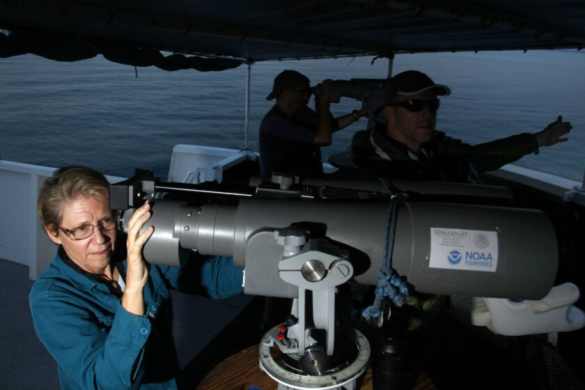 Barbara Taylor, chief scientist aboard the Ocean Starr, tries to locate a small group of vaquita in the Upper Gulf of California.