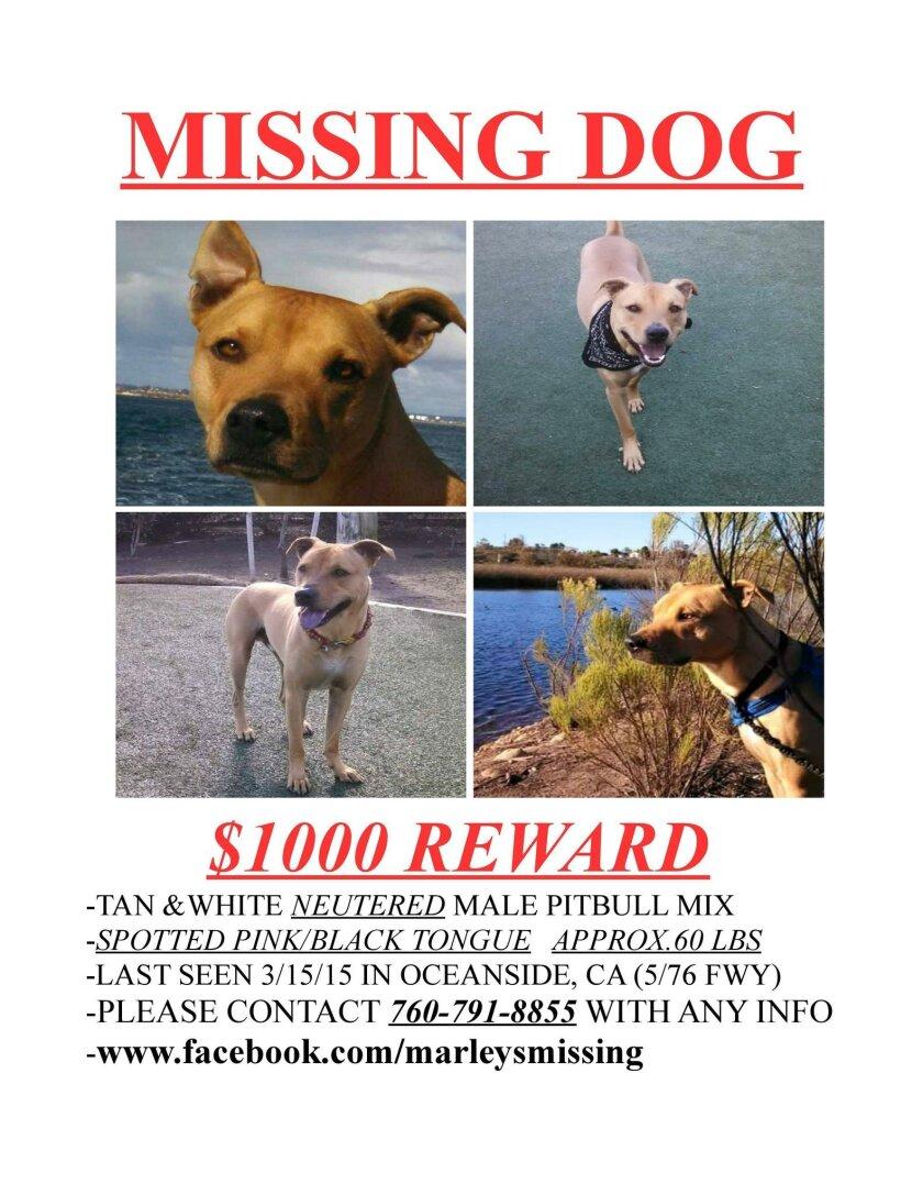 Flier for missing dog Marley