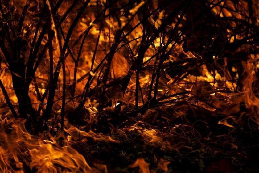 Los crecientes incendios y las sequías de verano están cambiando drásticamente el paisaje de plantas coníferas del norte de California y el suroeste de Oregón, según una nueva investigación financiada por la National Science Foundation y publicada hoy en la revista Scientific Reports. EFE/ARCHIVO