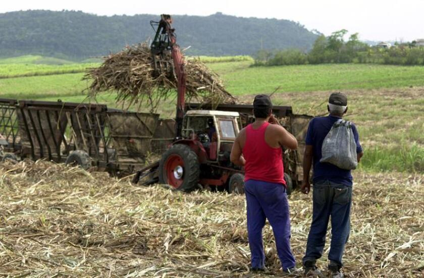 La industria del azúcar que durante varios siglos representó el sector más boyante de la economía cubana, pero desde mediados de la década de los pasados años noventa, coincidiendo con la caída del bloque soviético, sufrió un drástico declive en sus producciones del que no se ha recuperado. EFE/Archivo