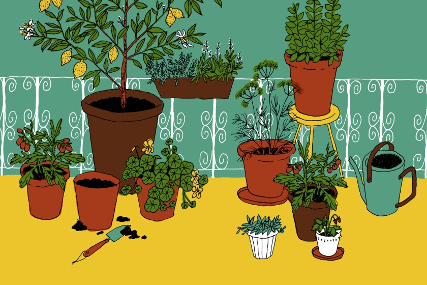 Illustration of various plants in pots on a balcony patio.