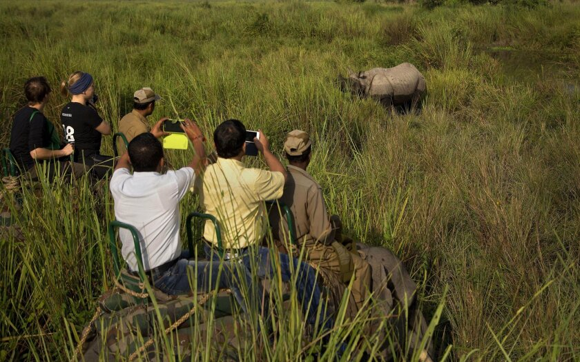 Tourists riding on elephants take pictures of a one horned rhinoceros at the Kaziranga national park at Kaziranga, northeastern Assam state, India, Sunday, Nov. 1, 2015. The park was reopened Sunday for tourists after its routine closure during the monsoon season. Assam is home to the world's large