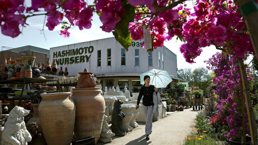 LOS ANGELES, CA - MARCH 24, 2015- A woman strolls through the Hashimoto Nursery the now trendy Sawte