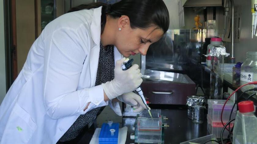 La doctora Luana de Borba trabaja en los laboratorios de la Fundación Instituto Leloir este 27 de febrero de 2019 en Buenos Aires (Argentina). EFE