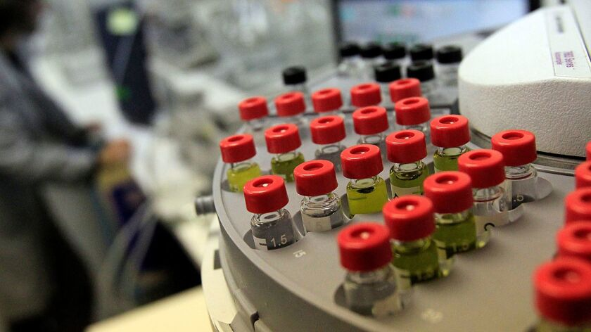 Marijuana extracts are tested and analyzed at Steep Hill Cannabis Analysis, an independent laboratory in Oakland, on July 20, 2012.