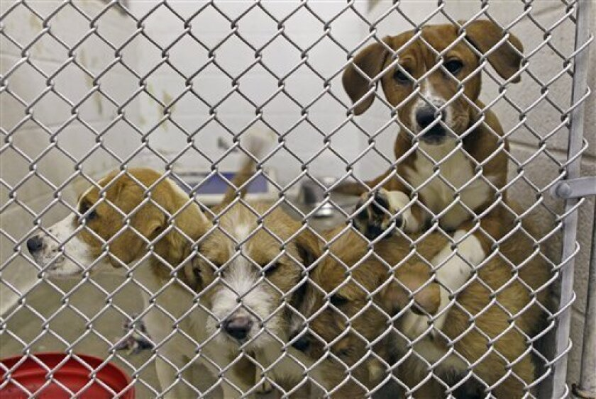 Pet pipeline gives hope, worry to crowded shelters - The San Diego