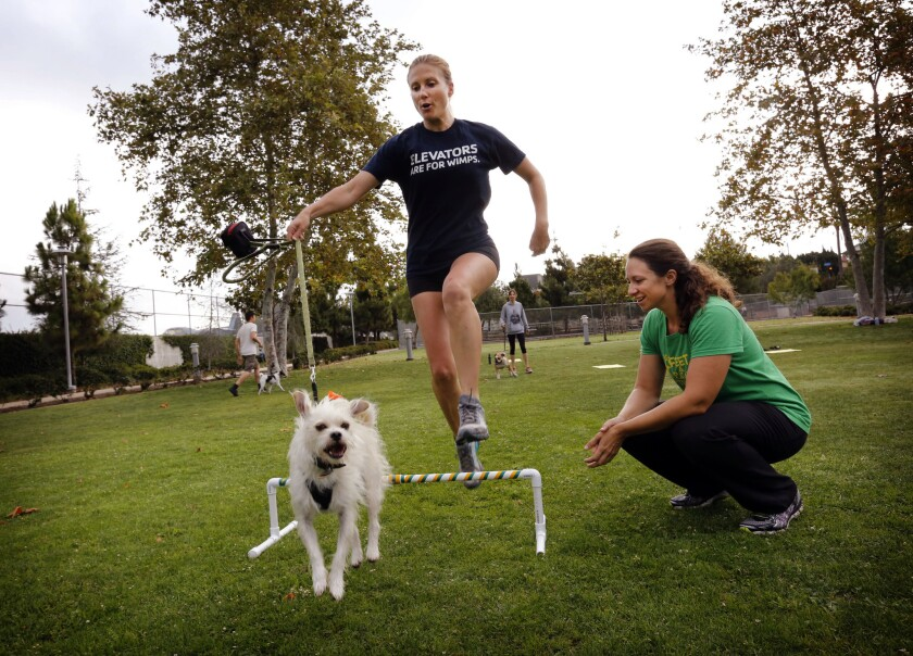 New Paws on the Block class for dogs and humans