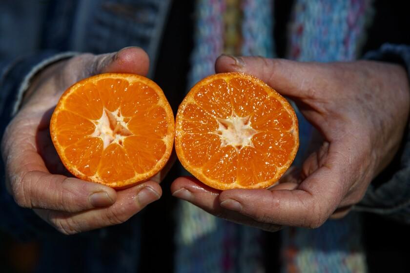 488771_la-me-citrus-greening-uc-riverside-citrus-collection_9_AJS.JPG