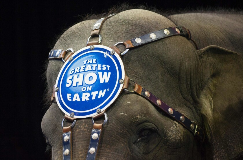 A March 2015 file photo shows an elephant before a Ringling Bros. and Barnum & Bailey Circus performance in Washington, DC.