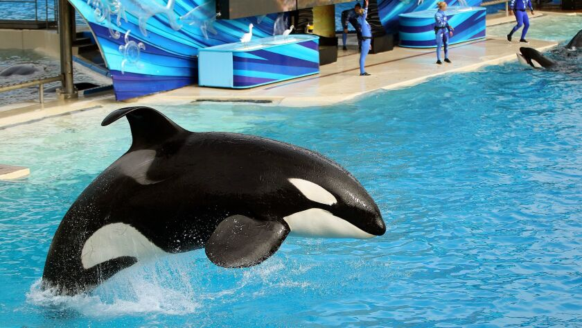 SeaWorld San Diego's theatrical Shamu show, One Ocean, will end Sunday and will be replaced this summer with a new Orca Encounter designed to showcase the killer whales' natural behaviors in the wild.