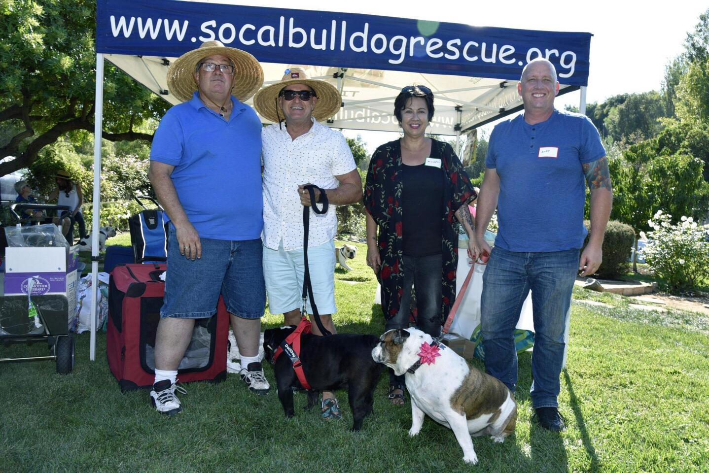 www.SoCalBullDogRescue.org Director Skip Van Der Marliere, George Britton with Beauty, aka Bea, MIchell and Andy Sydoriak with Polly