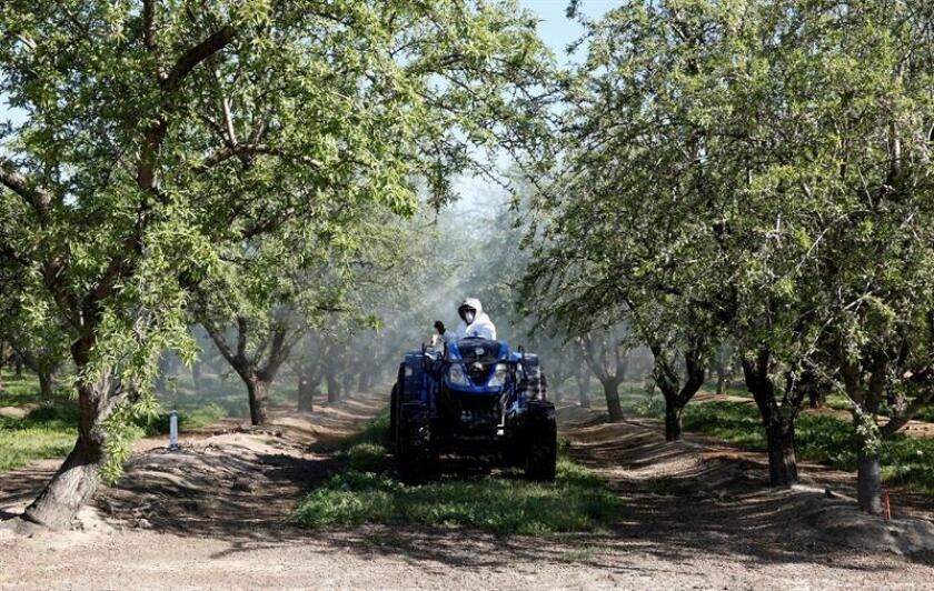 La detección de ejemplares de la denominada Mosca Oriental de la fruta en cultivos del condado de Miami-Dade ha puesto en alerta a las autoridades agrícolas, que temen el efecto destructor de esta plaga, informó hoy un medio local. EFE/Archivo