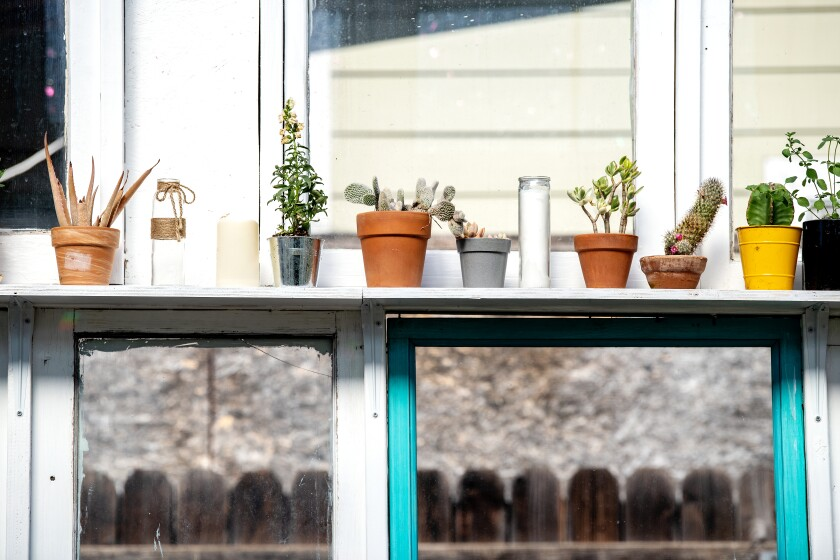 Plants line a shelf in the greenhouse.