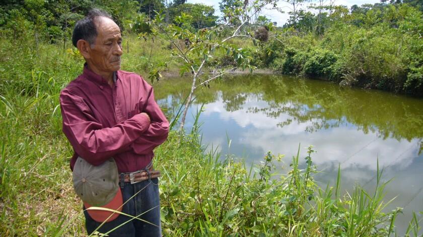 """Abel Garrido stands near his oil-polluted pond in Coca, Ecuador, in 2008. """"I've lost 30 cows,"""" he said. """"I cut them open and their insides are black."""""""