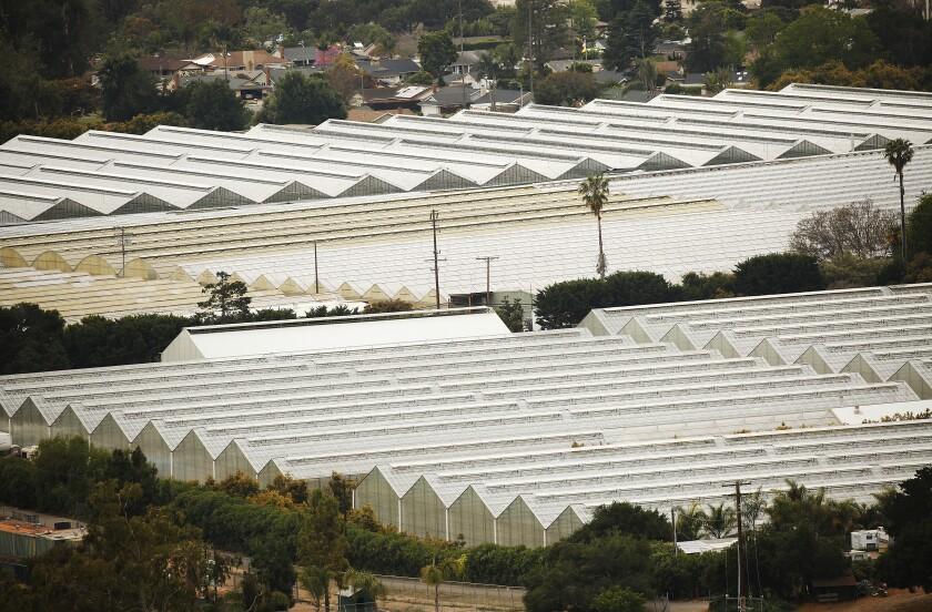 Greenhouses near Carpinteria High School