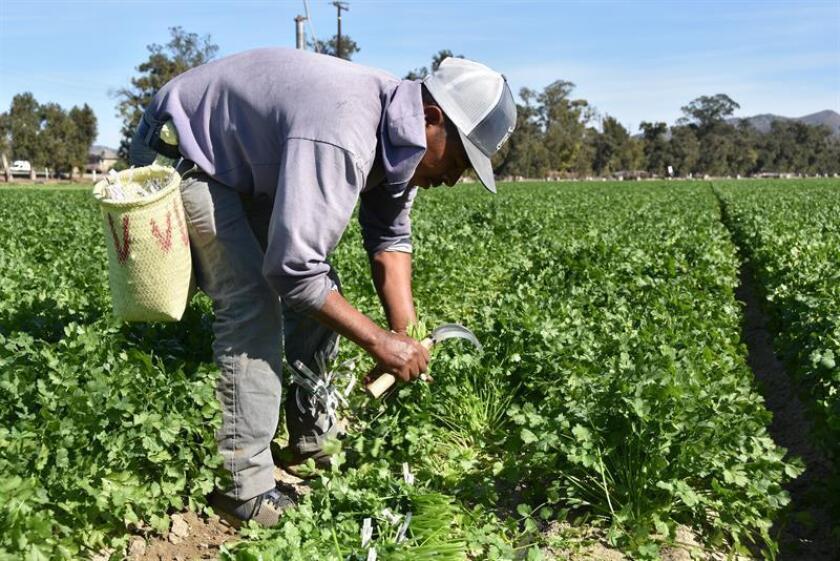 """Latinoamérica es """"clave"""" para la """"seguridad alimentaria global"""", dice el IICA"""