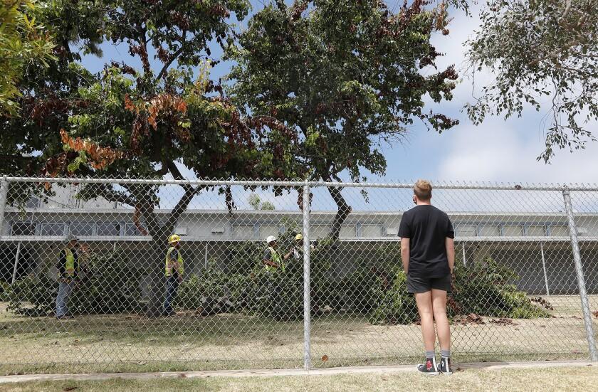 Wyatt Robertson watches Newport Mesa Unified contractors remove trees at Ensign Intermediate School Monday.