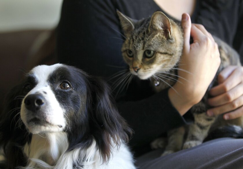 Sophia Garcia, a 22-year-old resident of San Ysidro, recently ran into issues with her landlord over the number of service animals she could have in her apartment. Garcia, pictured with service dog, Gordo, and service cat, Kina, is among the clients in the city of San Diego's revamped fair-housing