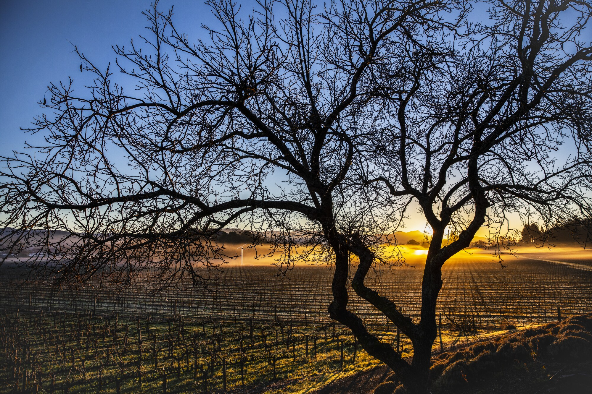 Morning light spreads over a vineyard