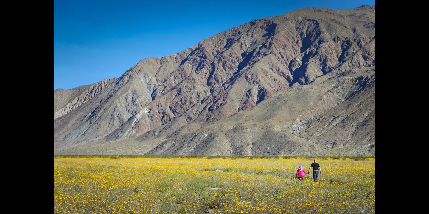 The Anza-Borrego Desert is alive with color