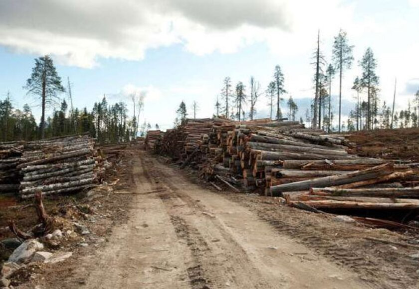 A 2011 photo provided by environmental organization Protect the Forest allegedly shows destroyed old-growth forest with piles of timber on land leased by IKEA/Swedwood in Russia's Karelia.