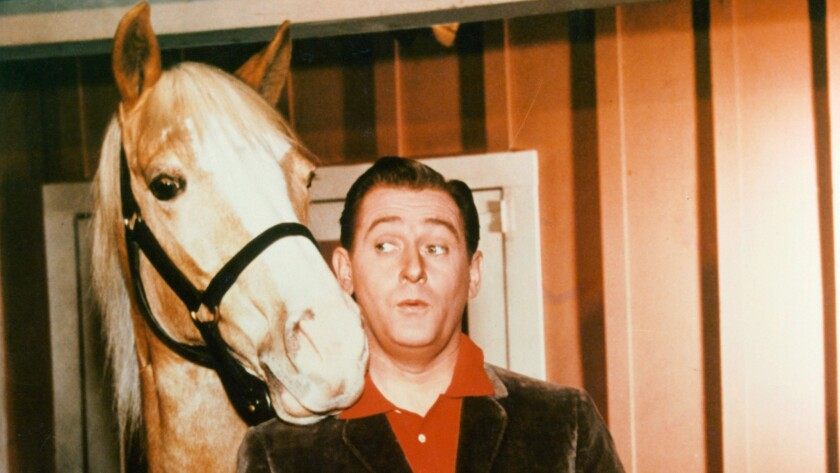 """Alan Young and Mister Ed the talking horse in a scene from the television series """"Mister Ed,"""" circa 1960."""