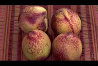 Fruit recall affects Trader Joe's, Costco