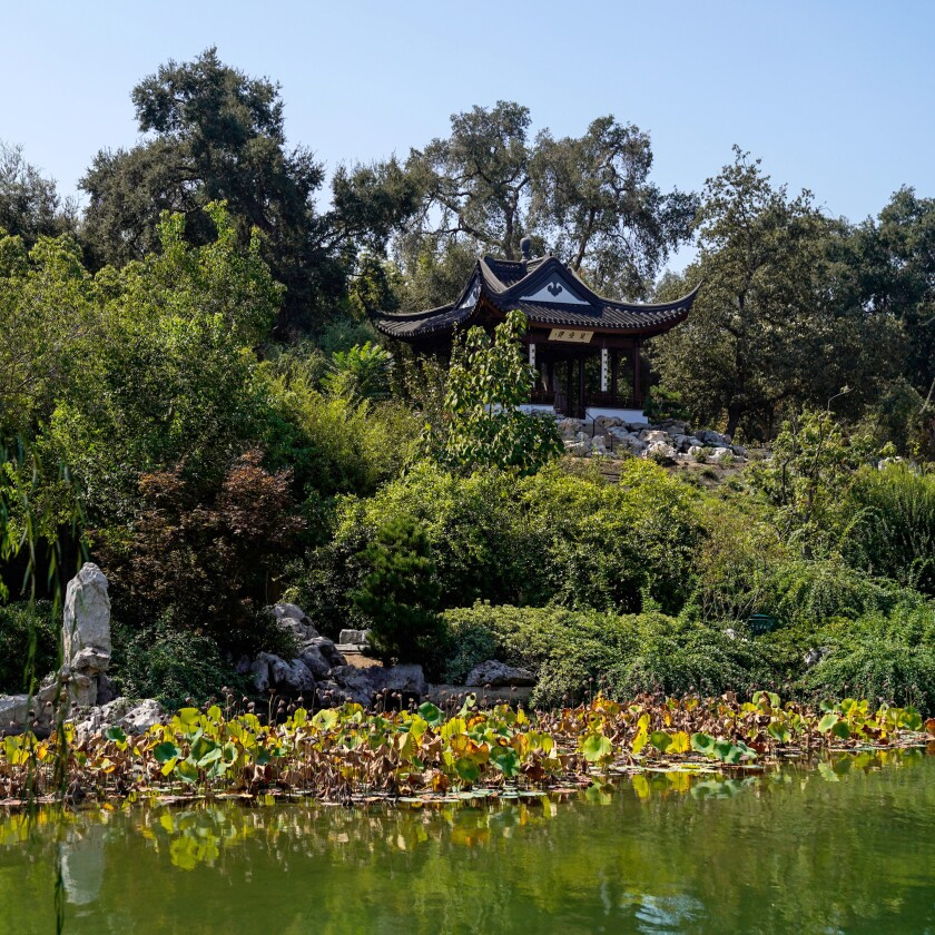 A Chinese pavilion and lily pond.