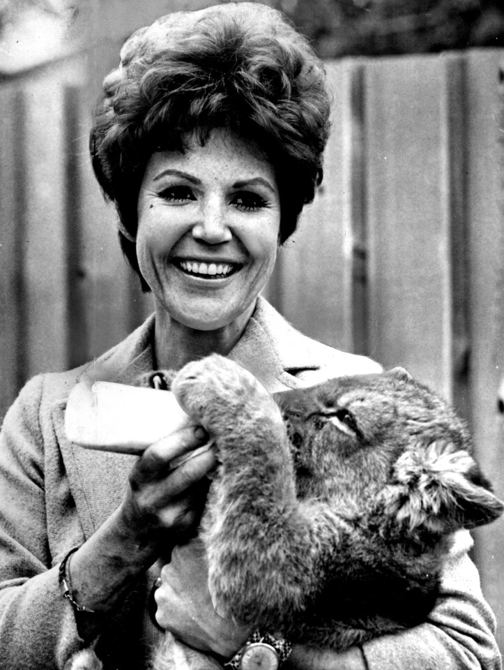 """Pat Derby and a lion cub are shown in 1968 in a promotional image for her NBC-TV show, """"Big Cats, Little Cats."""""""
